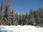 Покрытая снегом тайга