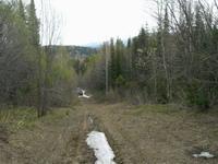 Снега в лесу сохранилось достаточно много