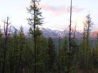 Мы спустились к границе лесной зоны